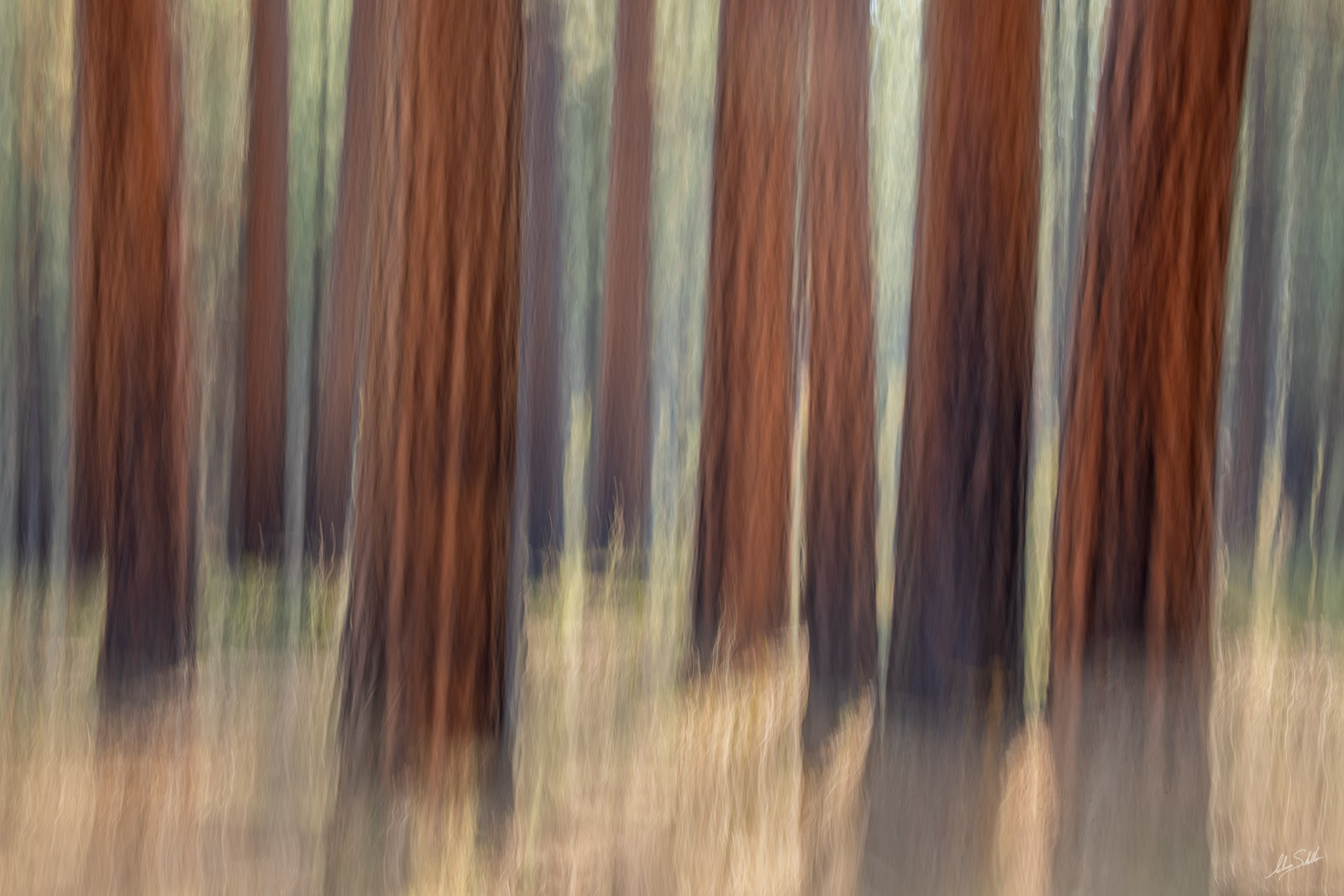 I used a long exposure to create this impressionistic interpretation of the forests of the Walhalla Glades on the North Rim of...