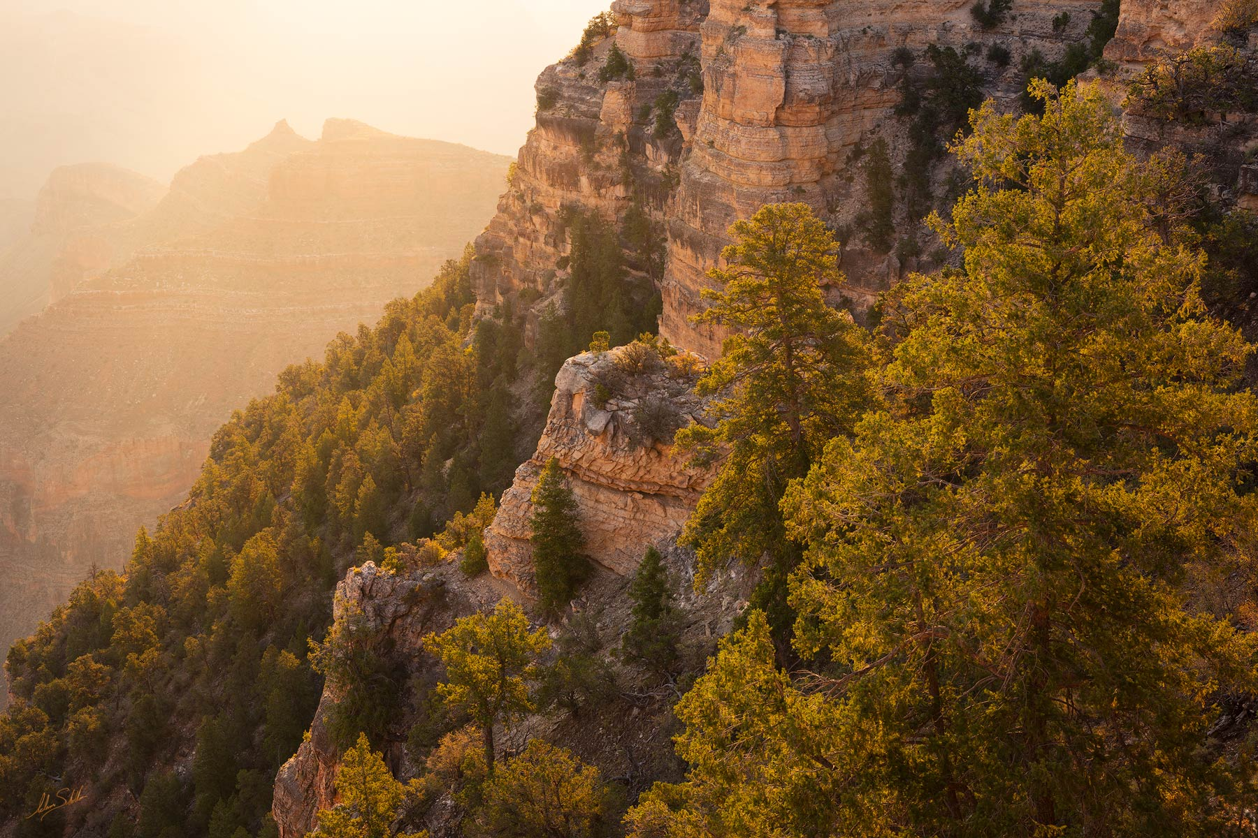 America, Southwest, Arizona, Colorado Plateau, Grand Canyon, National Park, Ponderosa Pine, South Rim, Southwest, Yaki Point, photo