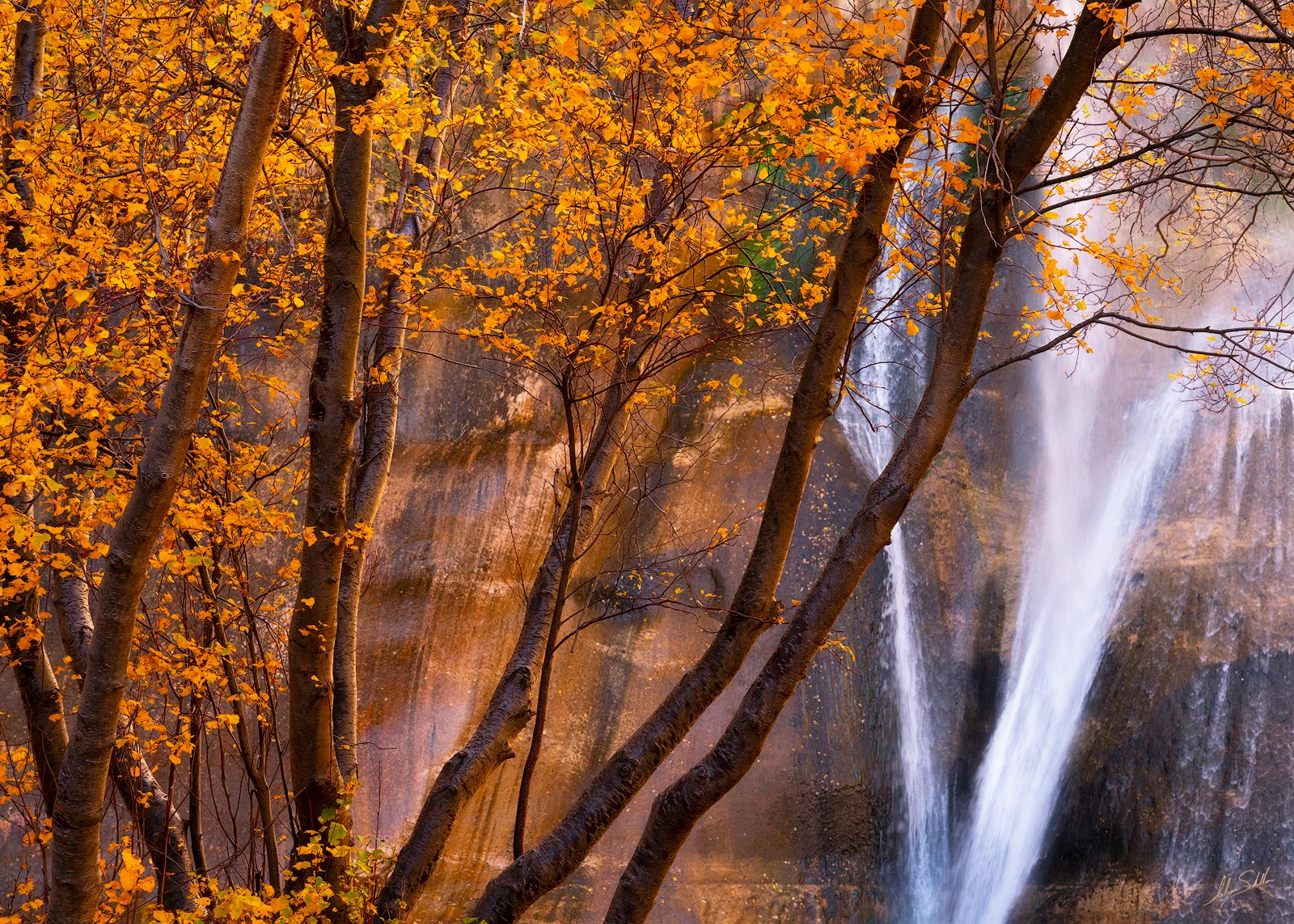 Autumn, Fall, Fall Color, Fall Color in Utah, grand staircase, grand staircase-escalante, Lower Calf Creek Falls, National Monument, UT, Utah, photo