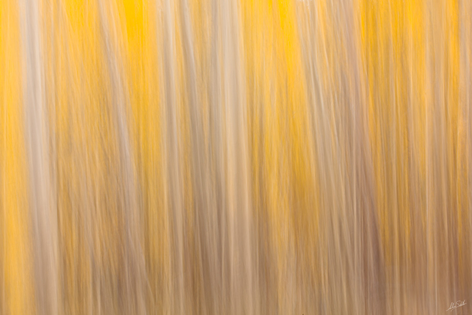An impressionistic interpretation of autumn color in the aspen forests in Valle Vidal, near Red River, New Mexico. This photo...
