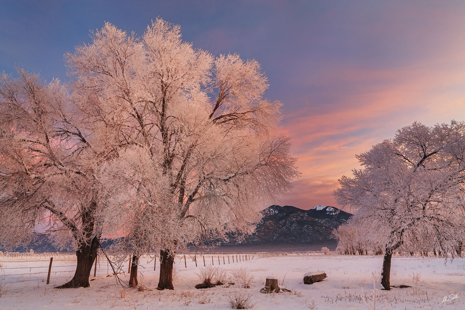 Cottonwood, NM, New Mexico, Pueblo Peak, Sangre de Cristo, Snow, Taos, Taos Mountain, Tree, Trees, Winter, frost, hoar frost, populus deltoides, rime ice, photo