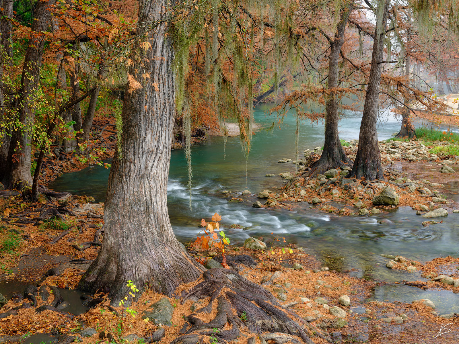 A touch of fall color in the cypress tress found along the Guadalupe River in the Hill Country of central Texas. © Adam Schallau...