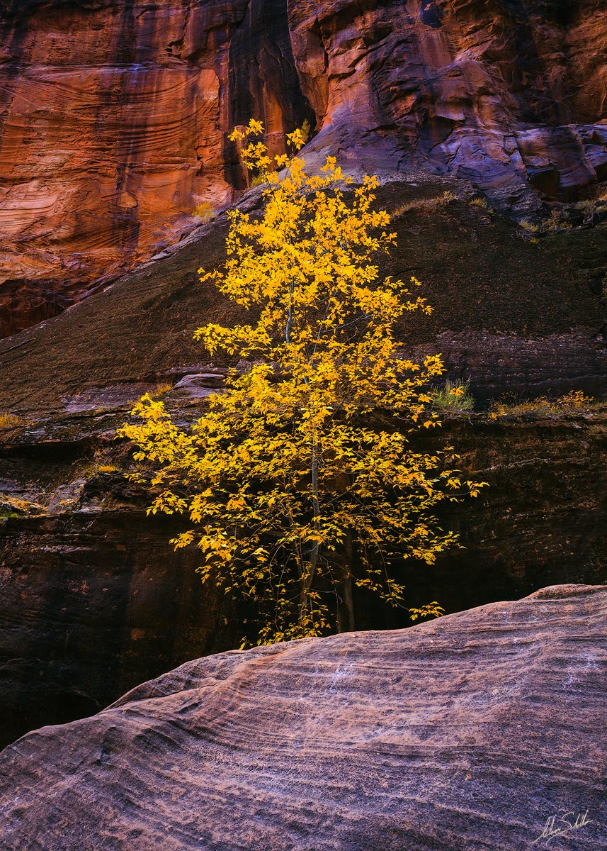Autumn, Fall, Fall Color, National Park, Virgin River Narrows, Zion, Zion National Park, narrows, photo