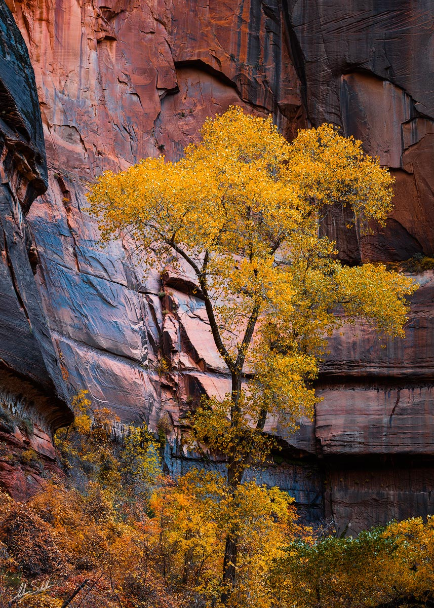 The colors of autumn in Zion National Park. Photo © Adam Schallau, All Rights Reserved.