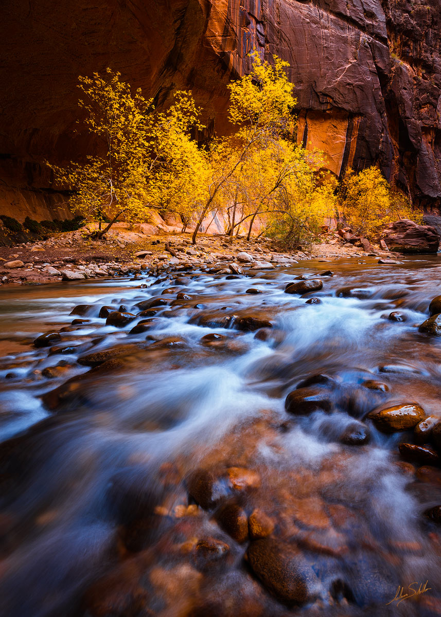 Autumn, Fall, Fall Color, National Park, Springdale, Tree, UT, Utah, Virgin River, Zion, Zion National Park, narrows, photo