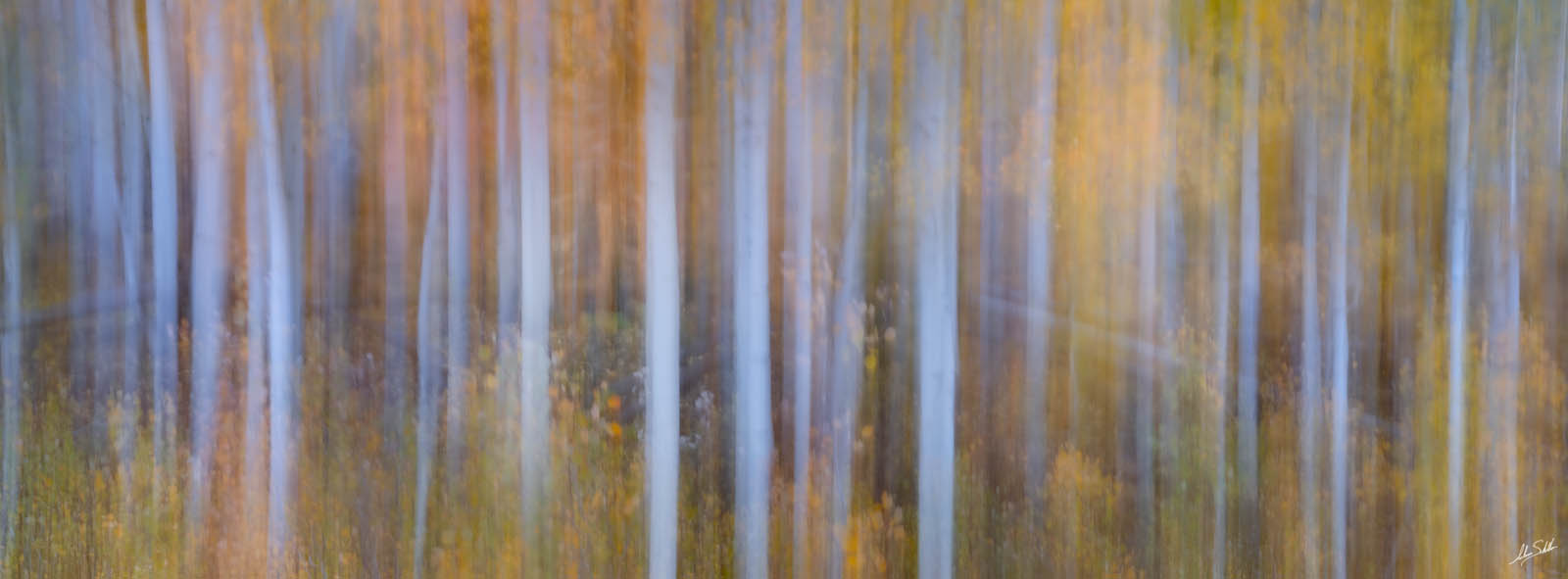 Abstract, Autumn, CO, Colorado, Fall, Fall Color, Forest, ICM, Impressionism, Intentional Camera Movement, Pano, Panorama, Panoramic, photo